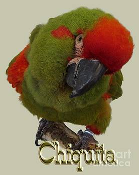 Chiquita, a Red-Front Macaw by Zazu's House Parrot Sanctuary