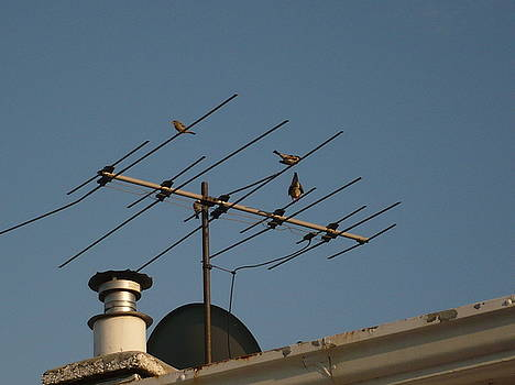 Chirping Antenna by Stephen Davis