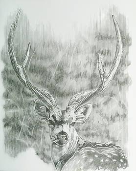 Barbara Keith - Chital Deer