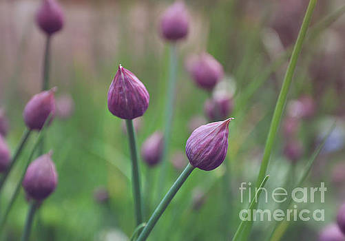 Chives by Lyn Randle