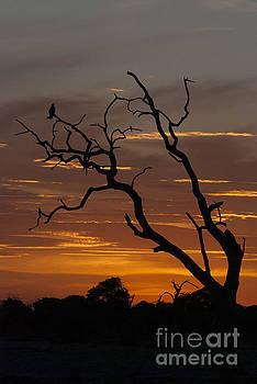 Chobe Silhouette by Leanne Byrom