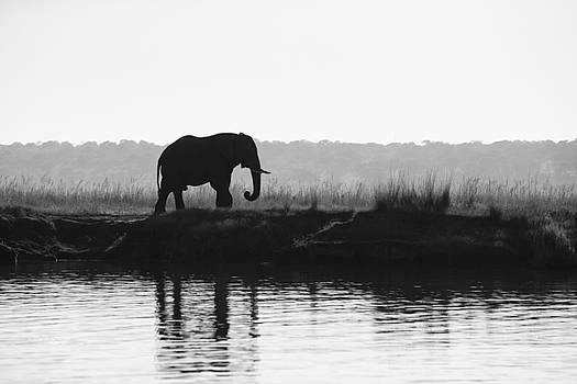 Chobe Sunrise by Mario Moreno