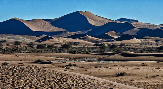 Chocolate Mousse Dunes by Sandy Schepis