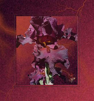Chocolate Thunder - Iris by Patricia Whitaker