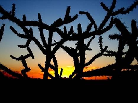 Cholla Sunset by Audrey Kanekoa-Madrid