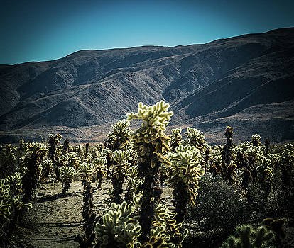 Cholla with Mountains by Elaine Webster