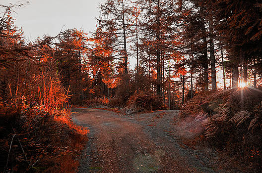 Choose the Road Less Travelled by Ian Thompson