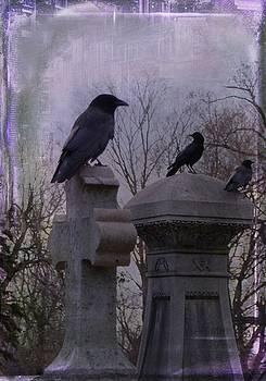 Gothicrow Images - Blackbirds Have Chosen Perches
