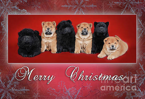 Chow chow Christmas card by Waldek Dabrowski