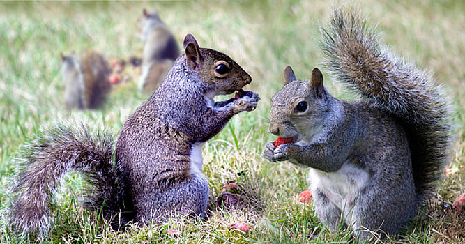 Chow Time by Russ Murry