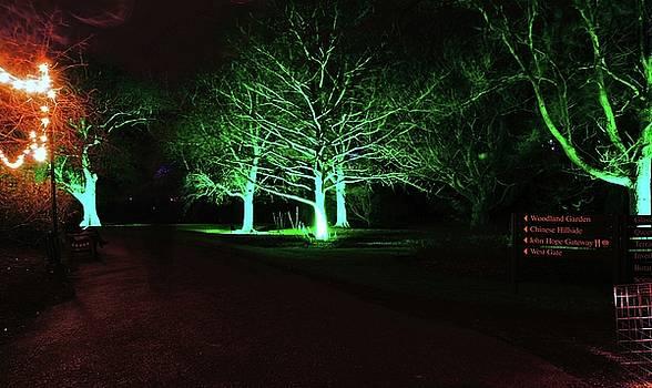 Christmas at The Botanics 1 by Nik Watt