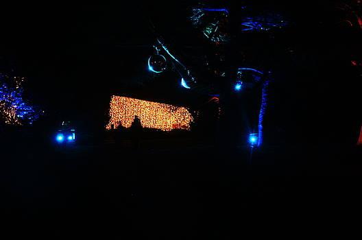 Christmas at The Botanics 29 by Nik Watt