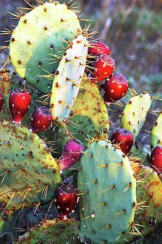 Christmas Cactus by Robert Anschutz