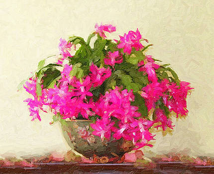 Christmas Cactus by Steve Meadows