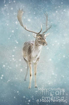 LHJB Photography - Christmas Card Deer