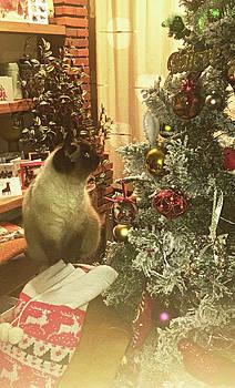 Christmas Cat by Anne Kotan