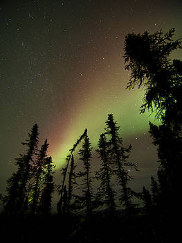 Ian Johnson - Christmas Colors Aurora