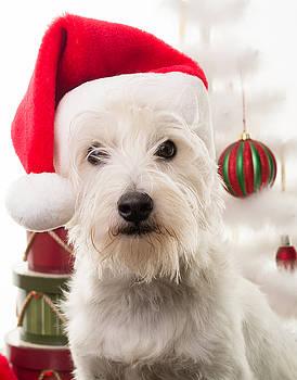 Edward Fielding - Christmas Elf Dog