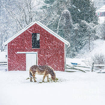 Christmas Eve Blizzard Stowe Vermont Square by Edward Fielding