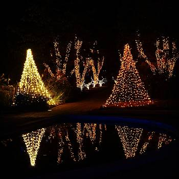 Christmas Garden 5 by Rodney Lee Williams