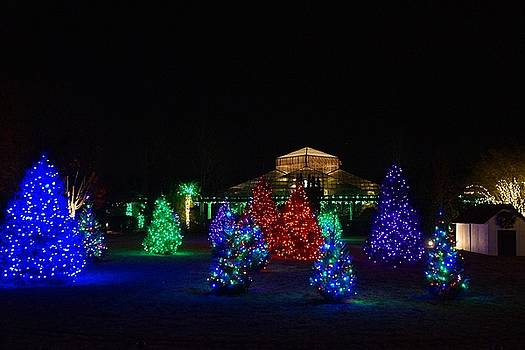 Christmas Garden 7 by Rodney Lee Williams