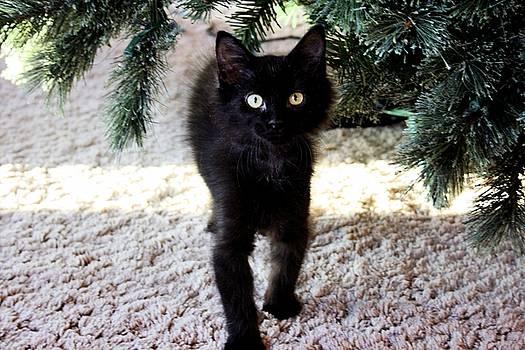 Christmas Kitten by Diamond Jade