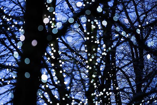Christmas Lights by David Taylor