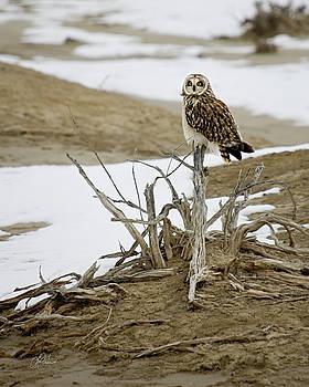 Christmas Owl by Lori Grimmett