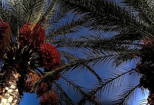 Christmas Palms by Lens Artist