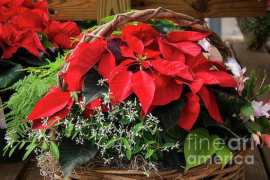 Jill Lang - Christmas Poinsettia Basket