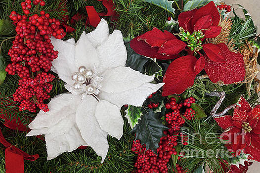 Christmas Poinsettias And Berries by Diane Macdonald