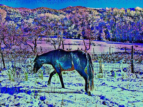 Christmas Roan El Valle IV by Anastasia Savage Ealy