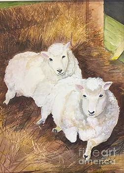 Christmas Sheep by Lucia Grilletto