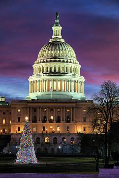 Christmas Tree at the U.S. Capitol by Dennis Kowalewski