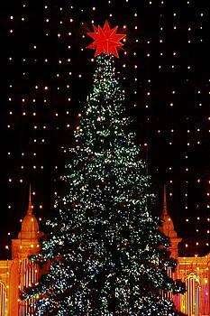 Christmas Tree  by John Wartman
