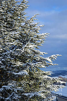 Christmas Tree - Winter in Switzerland by Susanne Van Hulst