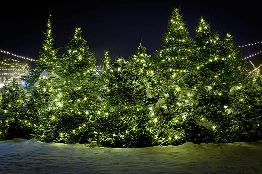Christmas Trees Aglow by Rick Berk