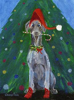 Christmas Weimaraner by Jamie Frier