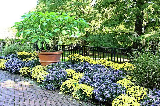 Chrysanthemum Garden by Trina Ansel