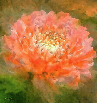 Chrysanthemum by Stacey Chiew