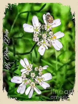 Cilantro Flowerlets by Renee Marie Martinez