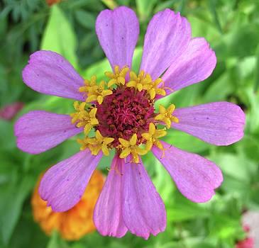 Cinderella Flower by Mary Ellen Frazee