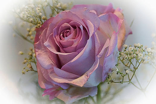 Cindy's Rose by Judy Johnson