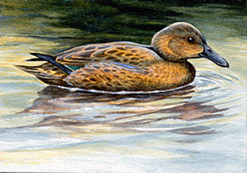 Cinnamon Teal Duck ACEO by Shari Erickson