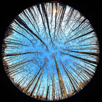 Circle grove by Roy Inman