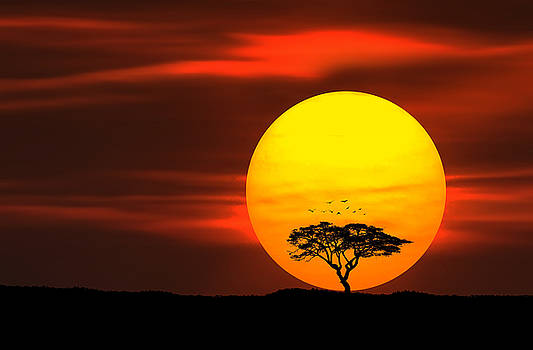 Circle of life by Bess Hamiti