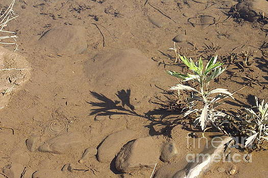Circle Shadow Plant by Marie Neder