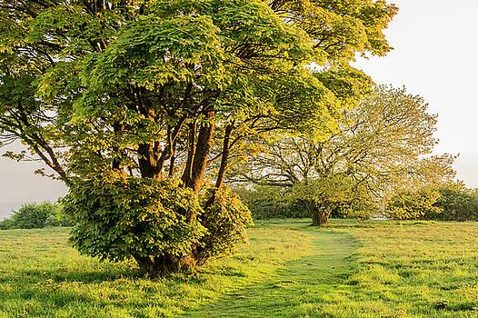 Cissbury Spring Green by Hazy Apple