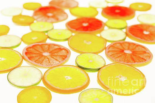Citrus field by Ekaterina Molchanova
