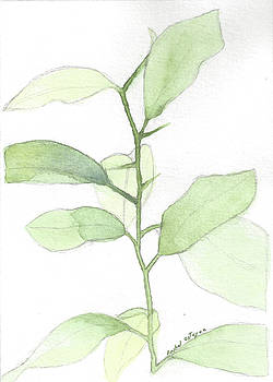 Citrus Sapling by Rachel Osteyee